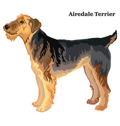 Colored decorative standing portrait of airedale vector