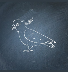 cockatoo parrot icon sketch on chalkboard vector image