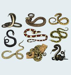 set viper snake serpent cobra and python vector image vector image