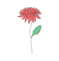 chrysanthemum flower on white vector image