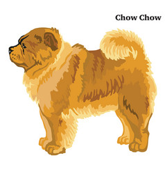 Colored decorative standing portrait of chow chow vector