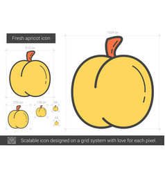 Fresh apricot line icon vector