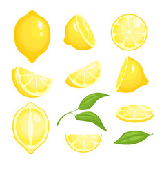 fresh lemons collection yellow sliced citrus vector image