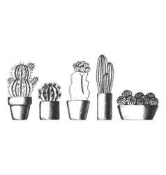 set cute cactus houseplants in pots vector image