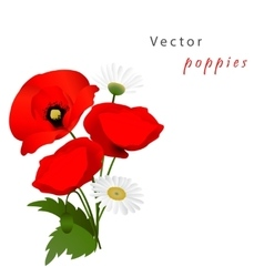 White background with poppies vector