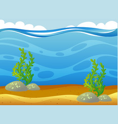 underwater scene with seaweeds vector image