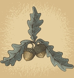 acorn woodcut vector image