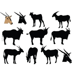 Antelope collection - vector