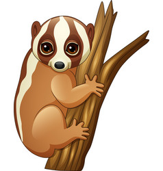 cartoon slow loris on the branch vector image
