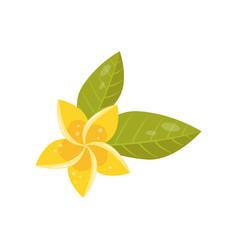 flat icon of frangipani plumeria vector image