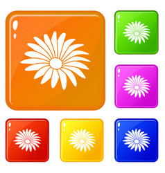 gerber flower icons set color vector image