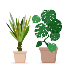 green monstera and palm vector image