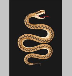 High detailed viper snake vector