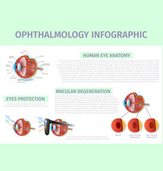 ophthalmology infographic banner with copy space vector image