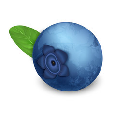 Raw blueberry icon realistic style vector
