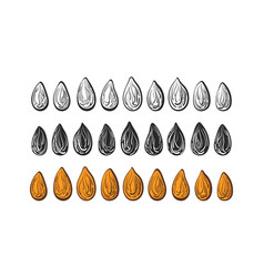 seed set art line nuts shape sketch sign vector image