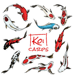 Set of koi carps japanese fish colored korean vector