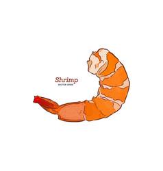 shrimp hand draw sketch vector image