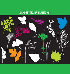 Silhouettes parts plants leaves flowers vector