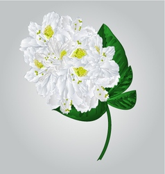 Twig white rhododendron mountain shrub vector image vector image