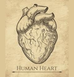 human heart retro sketch vector image