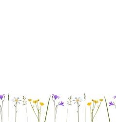 Seamless pattern wild flowers vector image
