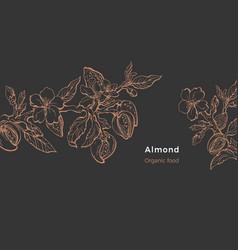 Almond template natural nut organic milk oil vector