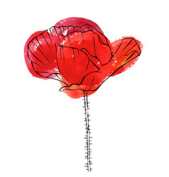 Drawing flower of poppy vector
