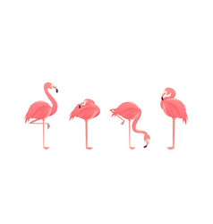 Set of flamingos isolated on white background vector