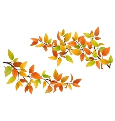 Tree branch with autumn leaves vector