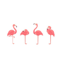 set of flamingos isolated on white background vector image
