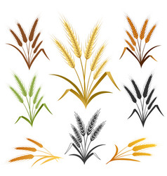 wheat ears emblem set vector image vector image