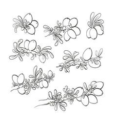 Argania tree set graphic hand drawn symbol vector