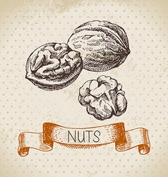 Hand drawn sketch nut vintage background of vector image