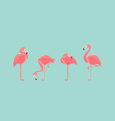 Set of flamingos isolated on background vector