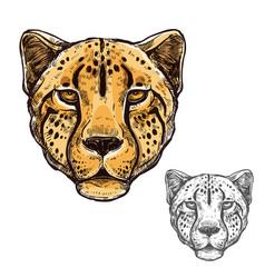 cheetah muzzle african wild animal icon vector image