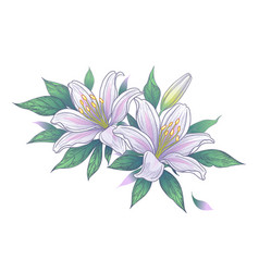 Hand drawn bunch with white lily flowers vector