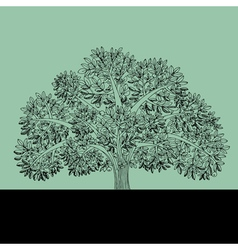 Sketch of apple tree vector