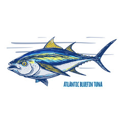 atlantic tun vector image vector image