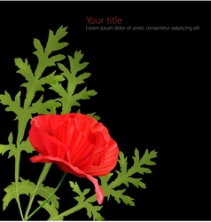 Poppy flower isolated on black background vector image