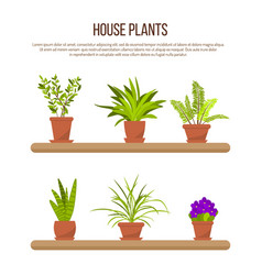 Collection of indoor house plants and flowers vector