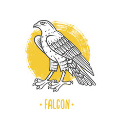 heraldic shields with falcon vector image