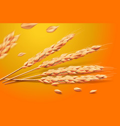 realistic wheat oats elements detailed barley vector image