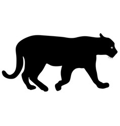 Silhouette beautiful panther on a white background vector