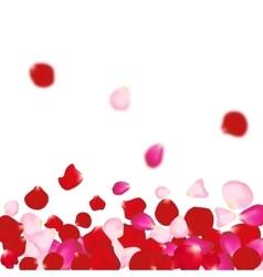 Rose petals background For presentations vector image