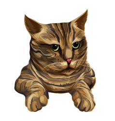 brown striped cat with green eyes head and paws vector image