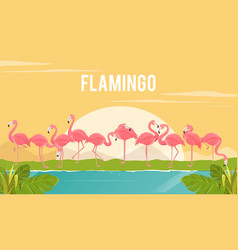 Set of flamingos on background vector