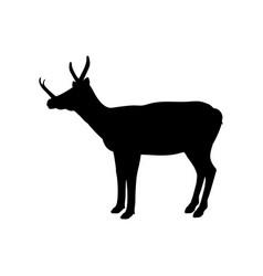 synthetoceras silhouette extinct mammalian animal vector image