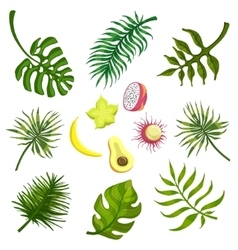 Tropical Leaves And Fruits vector