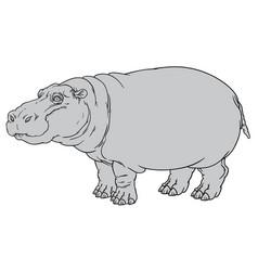 hippopotamus amphibius or river horse vector image vector image